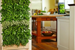 How to Grow a Vertical Herb Garden in the Kitchen Picture